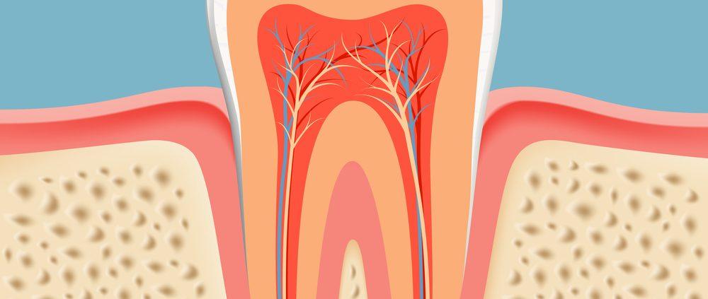 تعداد ریشه و کانال دندان